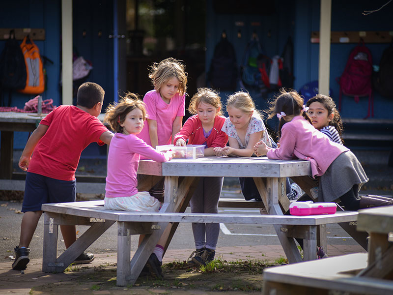 Students having lunch outdoor